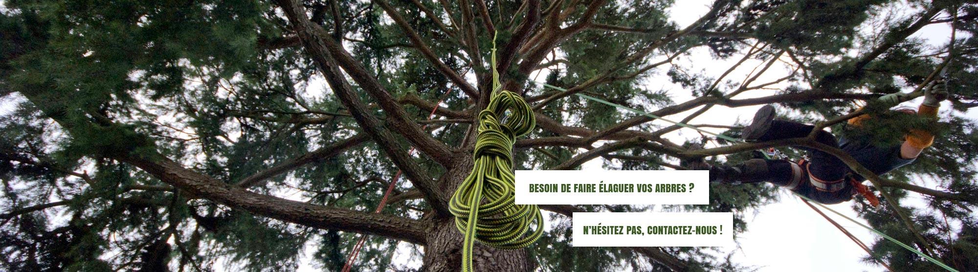 elagage arbre orleans. Black Bedroom Furniture Sets. Home Design Ideas